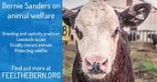 Bernie Sanders wants fur farms GONE!