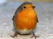 My Favorite Bird!