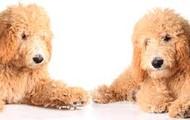 living teddy bears