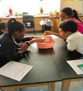Sixth and Seventh Grade Science - Ms. Matthews