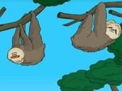 Shows Sloth