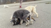 ...And more playfighting
