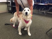Mrs. Vicki and Sophie, her therapy dog are back!