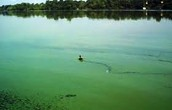 A Lake with Algal Bloom
