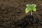 (VANI) resources... fertile soil (tobacco)