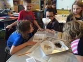 testing soil in 3rd grade