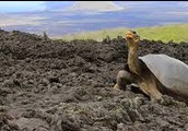 And the destruction of the galapagos