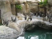 ^Penguins Exhibit