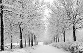Winter                          Bio-Poem