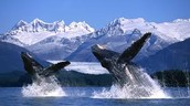 Alaska's Beautiful snow