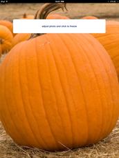 5. Adjusting the pumpkin