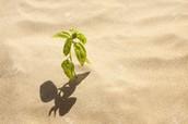 Plants on sand