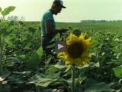 Organic Farming: Conserving Topsoil