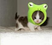 its a frog no a cat