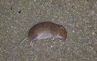 foresic had an image of the dead mouse.