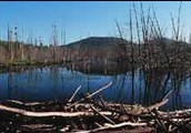 Acid rain kills tress and habitats.