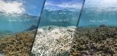 Coral Health Progression