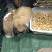 """Bunny """"Sitting"""""""
