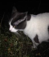 Random kitty on the streets