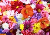 SVDP Spring Flower Sale