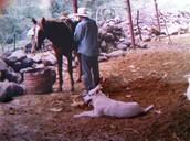 Unos de mis animales en Mexico