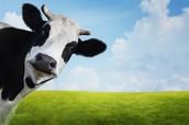 Cow-abunga Baby