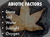 Deciduous Forests Abiotic Factors