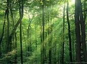 Deciduous rainforests