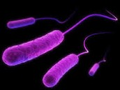 http://doh.dc.gov/service/frequently-asked-questions-about-e-coli