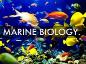 Marine biology is the study of animals living in or dependent on the oceans