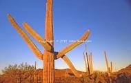 the wacky cactus