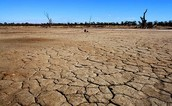 climate change heat stress