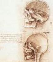 Human Skull and Head