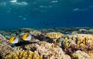 Marine Biologist Requirements