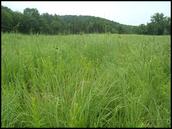 A Grasshopper's Habitat