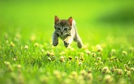 Cats love to run and play.