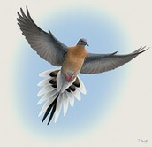 About Passenger Pigeons