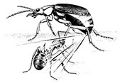 The Future of the Bombardier Beetle