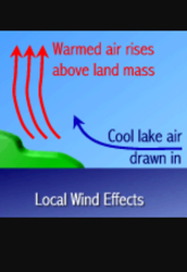 Key Concept: Local winds  are caused by the unequal heating of earths surface within a small area