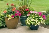 Allgrove Blooms Readers