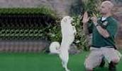 Animal Behavioral Trainer