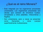 moneras