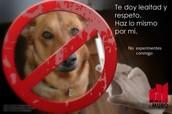 estamos contra el maltrato animal :