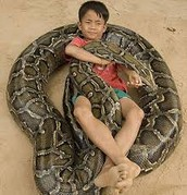 boy playing with a snake
