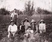 Japanese Labor