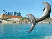 Ocean World  Dolphin Swim