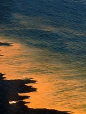 What causes Harmful Algal Blooms