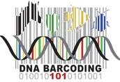 Sample barcoding