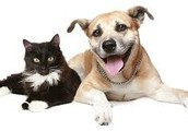 Help us make pawsitive change in our community for animals