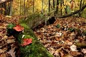 Leaf Litter Lab